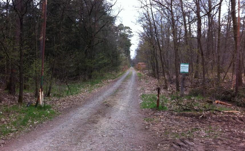 Forst Rundshorn