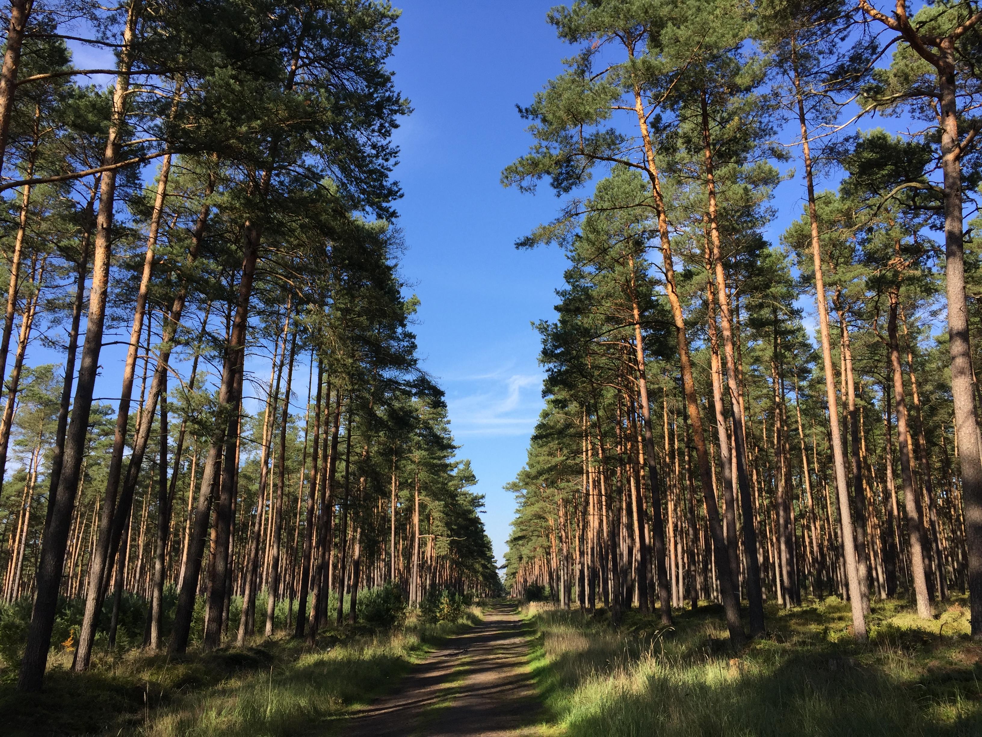 Crossing Forst Rundshorn to Contidrom/Jeversen