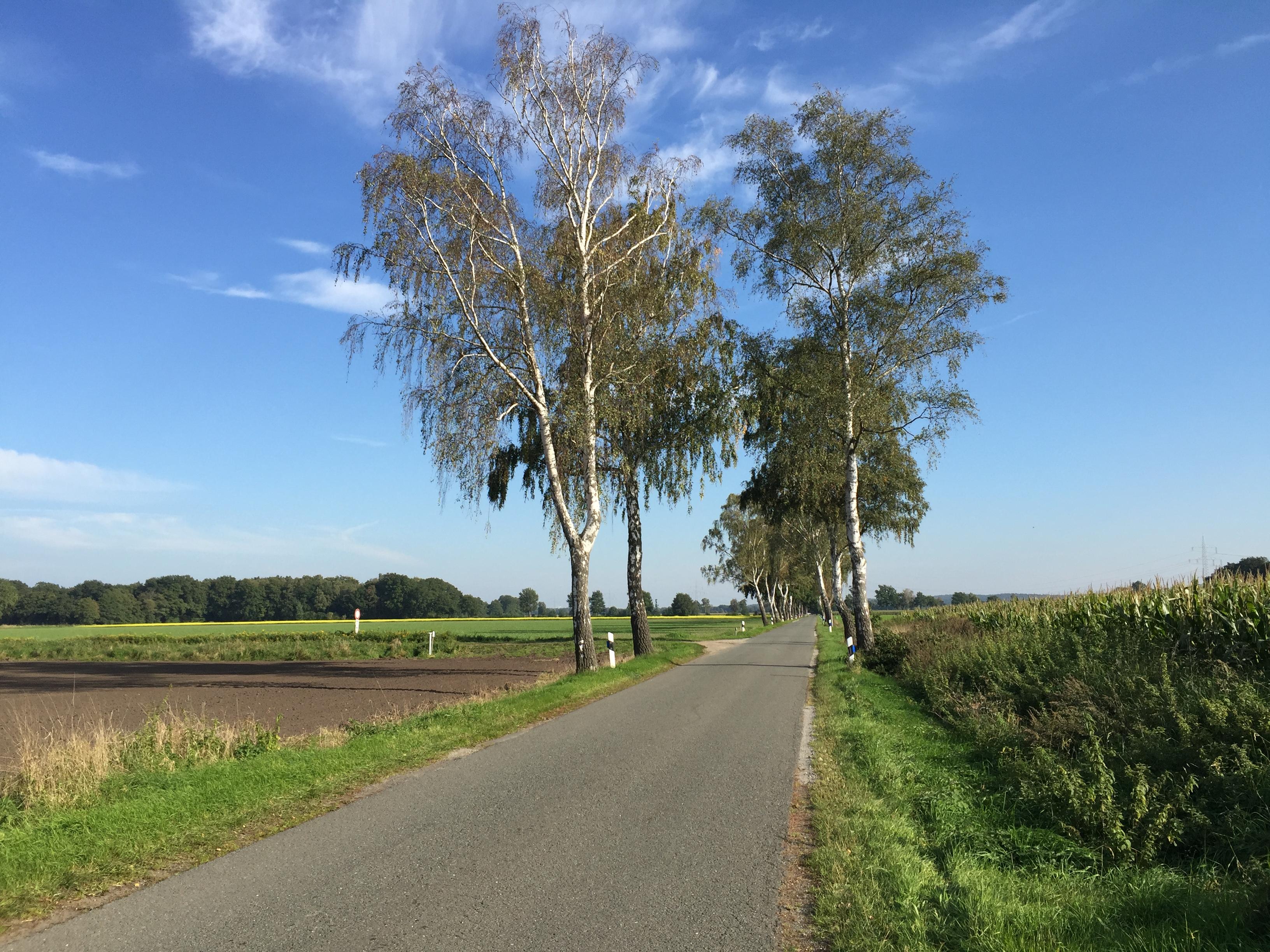On the road between Vesbeck and Abbensen
